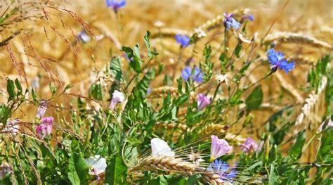 Warum So Viele Pilze Im Garten by 284 Besten Kr 228 Uter Pilze Co Bilder Auf