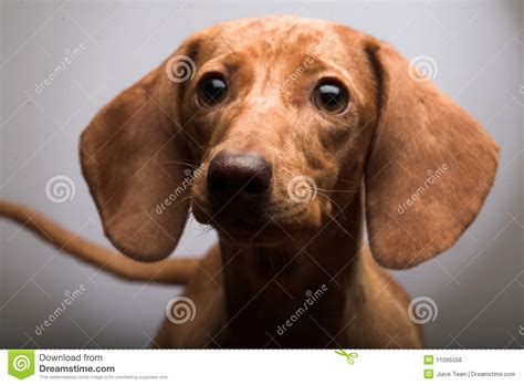 puppy rate puppy rate royalty free stock image image 11095556