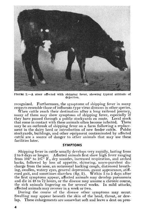 Shipping Fever of Cattle: Hemorrhagic Septicemia - Page 4