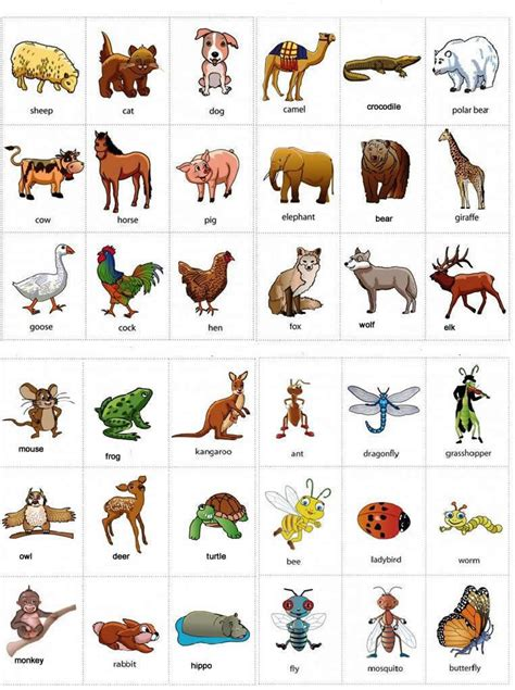 Early Learning Book Animal Dan Animal Planet Pets Activity Book animals names with pictures learning
