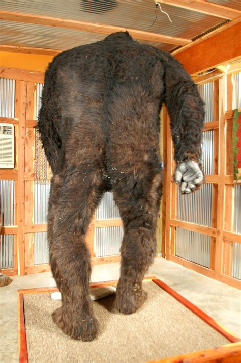 Bigfoot Email Search Bigfoot Auction Not A Success Skunkape
