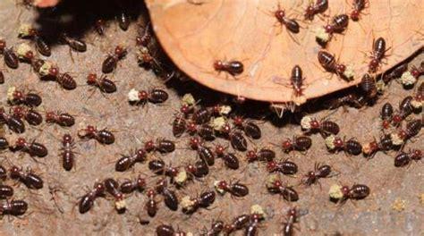 rid  termites