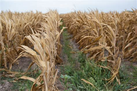 texas commodities top 1 percent of texas commodity farmers get quarter of 1