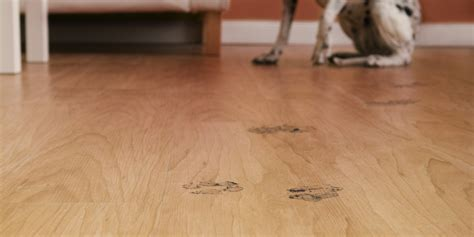 dogs and hardwood floors 28 images the 3 best wood flooring options for homes with dogs