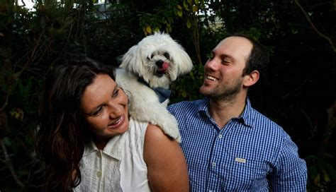 shih tzu free to home newcastle zeppelin the well travelled pooch is named cutest of them all newcastle herald