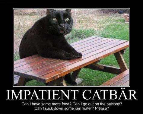 Impatient Meme - impatient meme 28 images 25 best ideas about impatient