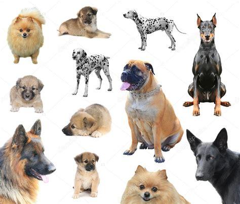 imagenes niños diferentes razas razas de perros diferentes fotos de stock 169 bazil 51517331