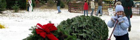 cut your own christmas tree christmas tree farm near