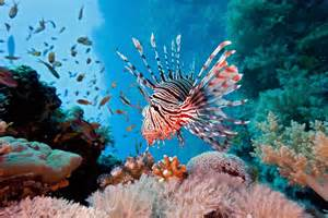 coral reef fish earth