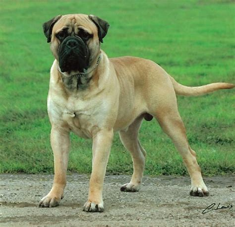 best guard breeds top 10 best guard breeds