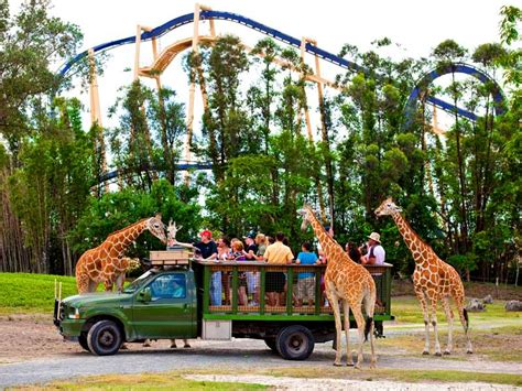 Where Is Busch Gardens In Florida by Busch Gardens Ta Bay Enjoy Animal Encounters And