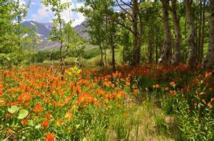 photo friday an orange flower meadow lemons and lavender