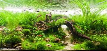 2012 aga aquascaping contest entry 390