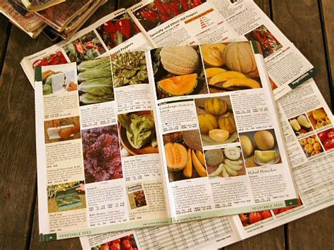 urban garden casual 187 successful gardening 101 how to get the most from your seed catalogs