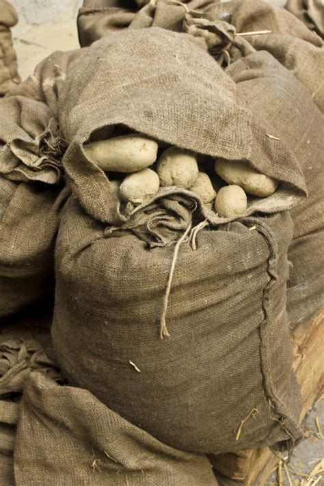 wann sind kartoffeln gar wann sind kartoffeln giftig 187 so sch 252 tzt du dich