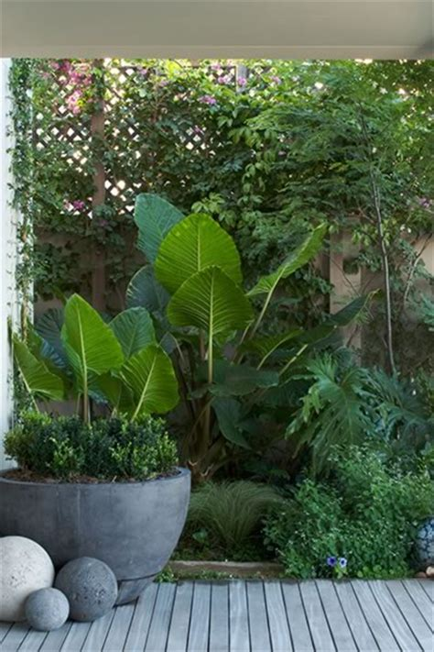 tropical container garden exemple de composition florale avec pot dans jardin