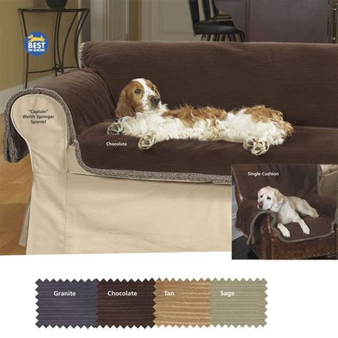 best couch for pets 17 best images about canine video products on pinterest