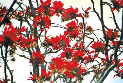 new year flower tree features edition of daily news lakehouse newspapers