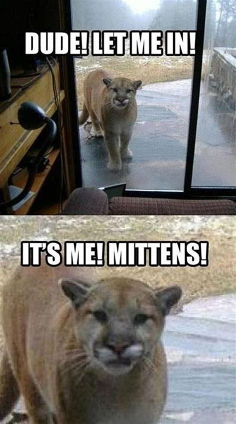 Funny Animal Meme - 30 funny animal captions part 4 30 pics amazing