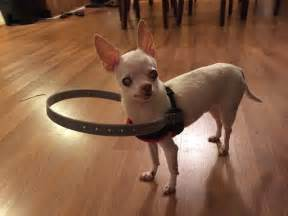 lil blind s family invents a bumper collar for