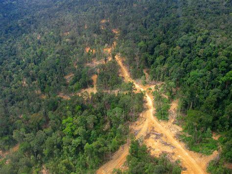 amazon wikipedia indonesia file logging road east kalimantan 2005 jpg wikimedia commons