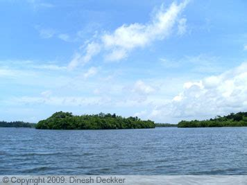 madu ganga boat safari price lakdasun trip reports archive 187 scenic boat safari in madu