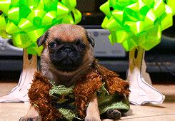 the pet collective pugs my gifs animals pug how to your httyd the pet collective