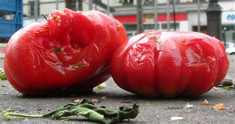 Or Rotten Tomatoes File Rotten Tomatoes Jpg Wikimedia Commons