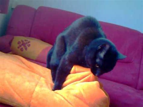 Kater Milchtritt Decke kater begattet decke ehem katze beim speziellen