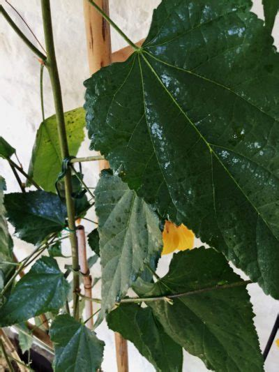 houseplant  sap  leaves   fixes  sticky