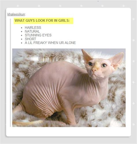 Sphynx Cat Meme - hairless cats funny pictures to pin on pinterest pinsdaddy