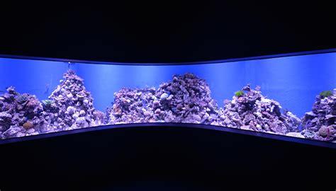 aquarium design brisbane cairns aquarium dives deep for australia s bio diversity