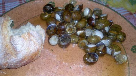 cucinare lumache di terra ricerca ricette con lumache di terra giallozafferano it