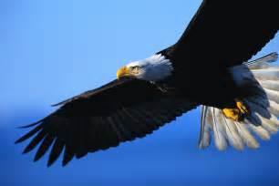 How To Set Up A Blind Trust My Faith My Life Eagles