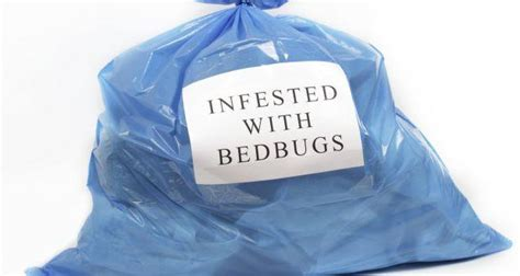 What Temperature Do Bed Bugs Freeze by Bed Bugs Can Survive Freezing Temperatures Read Health