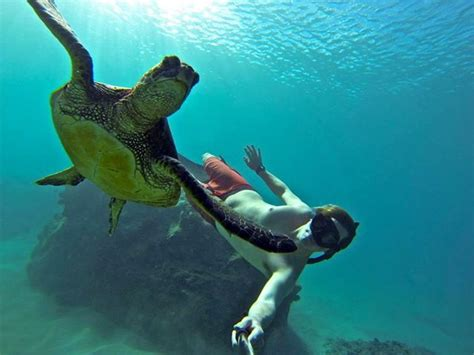 gopro underwater can gopro cameras make you the vacation while looking