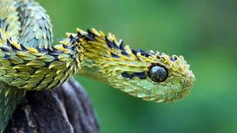 snake colors 10 land and sea animals you won t believe exist