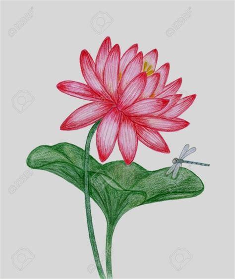 disegni a matita fiori disegni di fiori a matita home visualizza idee immagine