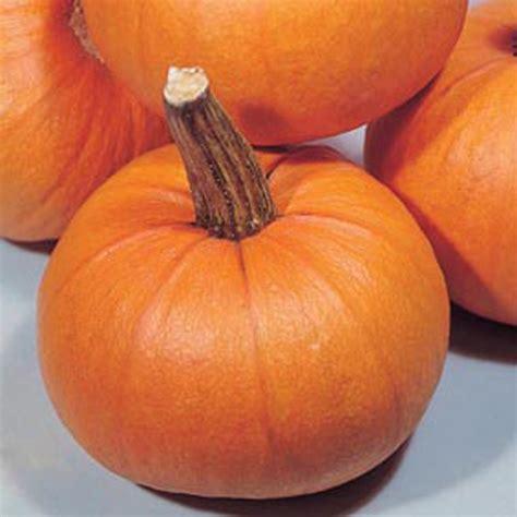 Product Find Pumpkin Sugar 3 by Mr Fothergills Co Uk