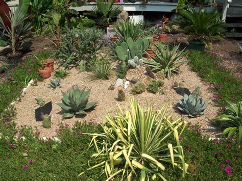 landscaping for small backyard small cactus garden design for cactus landscaping