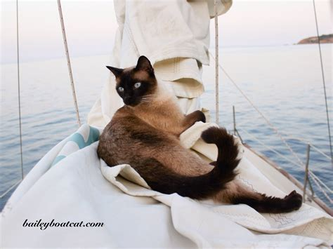 living on a boat with cat birthday bash for battersea dogs and cats home bailey