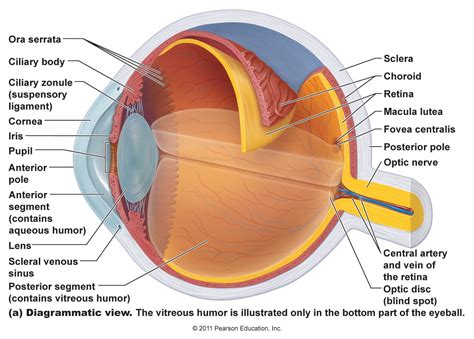 diagram and functions structure and function of human eye diagram of anatomy