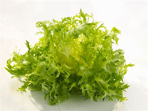 what is fris 233 e the great chicory endive escarole mystery