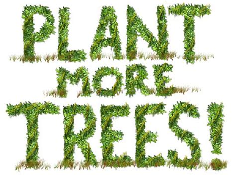 tree to plant journey to excellence p is for quot planting trees quot