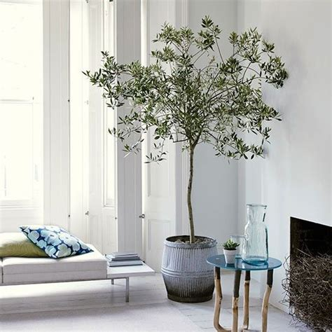 tree in living room white living room with olive tree gardens plants and living rooms