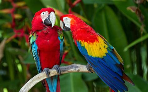 mexicanlove bird readers tips the world s most colourful sights