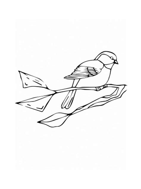 chickadee bird coloring page chickadee coloring pages download and print chickadee