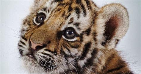 imagenes de animales lindos los animales m 225 s bonitos taringa