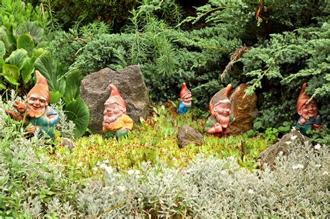 tradition  putting  gnome   garden started