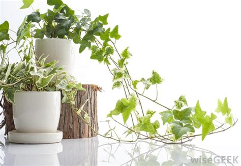 types of indoor plants how do i choose the best indoor plant pots with pictures
